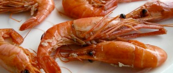 Panel Challenges Gulf Seafood Safety All-Clear